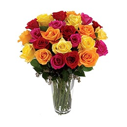 Flowers: Rose Mix in a Vase