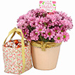 Flowers: Sweet Mom - Mothers Day Gift